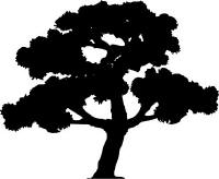 image of a tree in silhouette